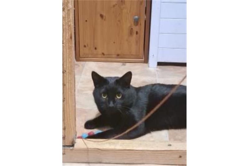 Sooty Image 2