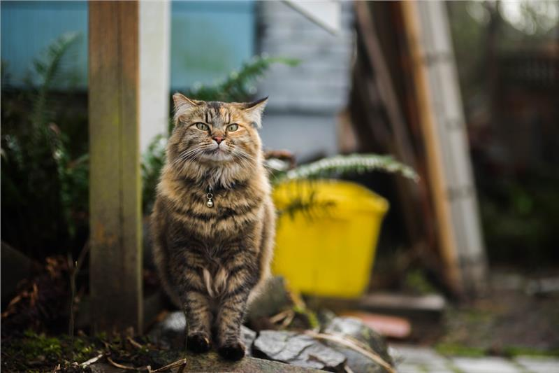 Feral/Farm Cats Image 1