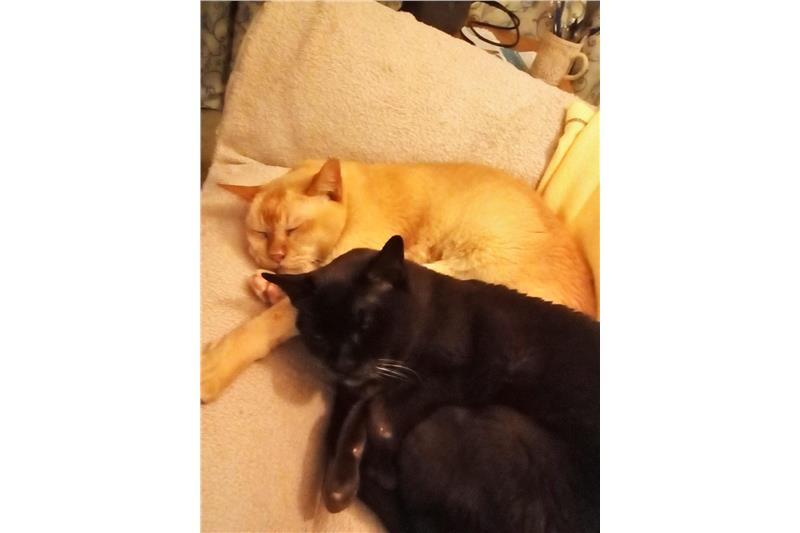 Bailey & Misha Image