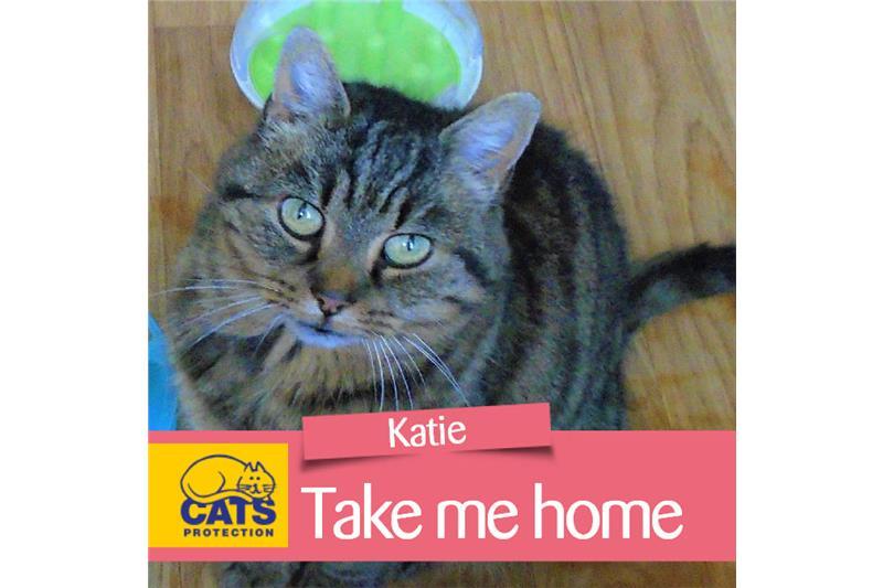 Katie HOMED Image