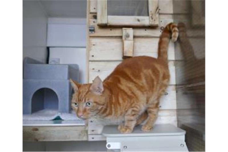 Ginger Image 1
