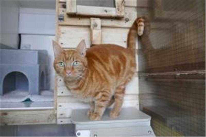 Ginger Image 2