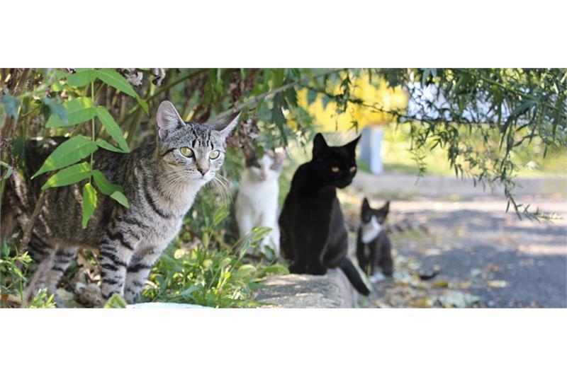 Feral/Farm Cats Image