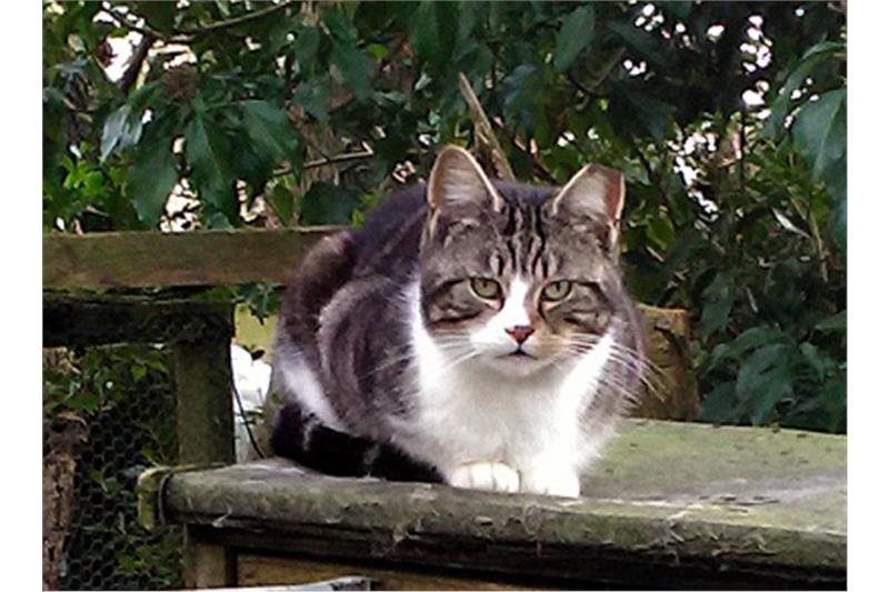 Feral Cats Image